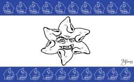 jew israel jewrican star 34051805_176755796493356_4854363636430274560_n